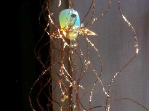 Shine Jellyfish of Harbour Island